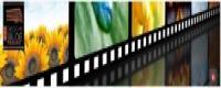 Aquí podéis encontrar información y videos sobre el Short Movies Festival en el que trabajan nuestros estudiantes: